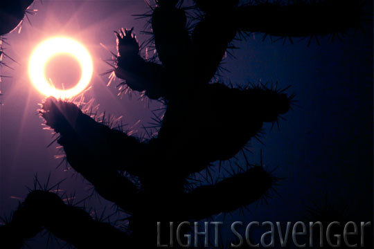 annular eclipse with cholla silhouette