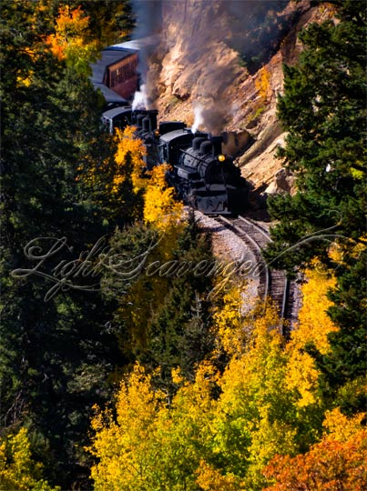 The Cumbres and Toltec steam engine rounds a bend through yellow aspens