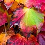 Fall's Last Gasp