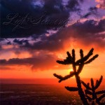 Sunset: Cholla Silhouette