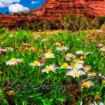 Red Rock and Wildflowers