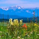 Northern NM Wildflowers