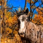 Horse in the Jemez Valley