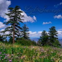 Sandia Wildflower Meadow