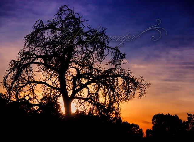 Tree at Sandstone Bluffs