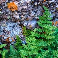 Ferns and Lichens