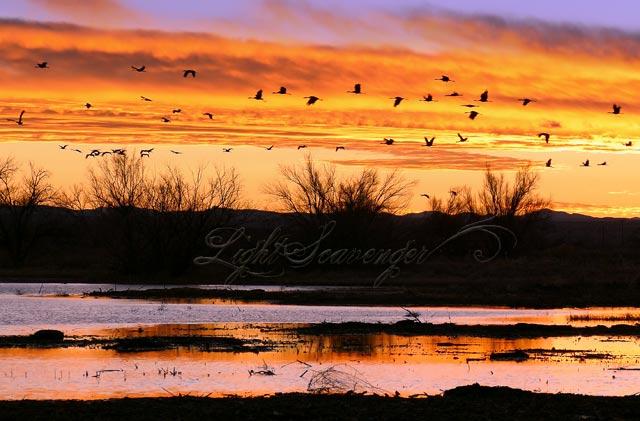 Cranes at Sunset in Bernardo