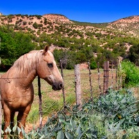Jemez Horse