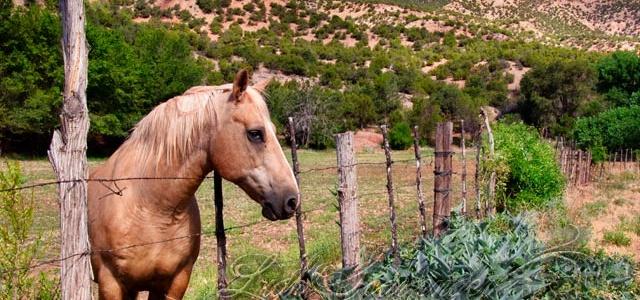Horse in a field in Jemez