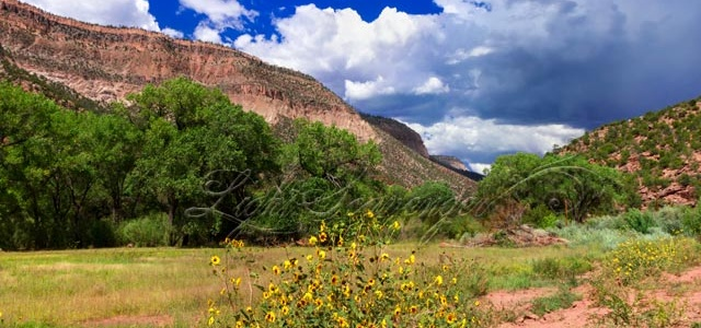 Jemez: San Diego Canyon with Sunflowers