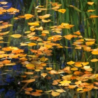 Yellow Leaves and Green Reflections