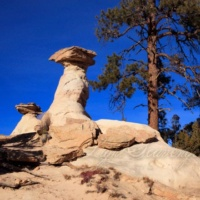 Hoodoos and Ponderosas
