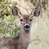 My Deer Friend, 2021 Edition