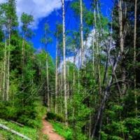 Big Tesuque Trail