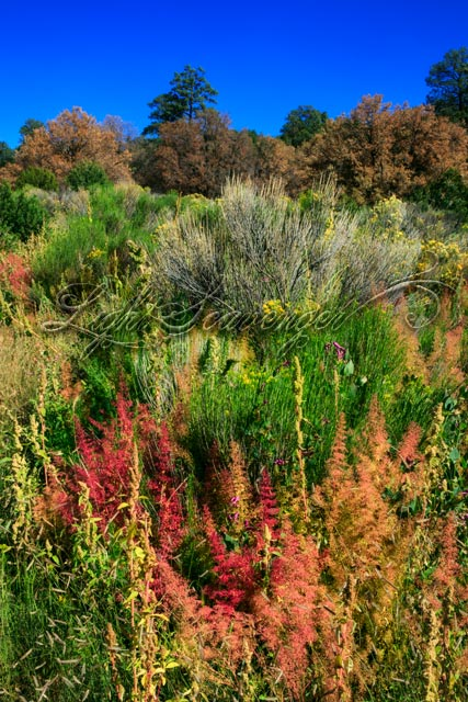 Fall Blooms at El Malpais